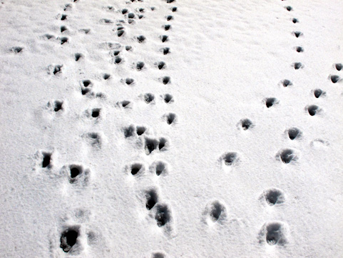雪a0002_006371