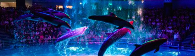音と光が融合した「エプソン アクアパーク品川」のクラゲとイルカショーがすごい!