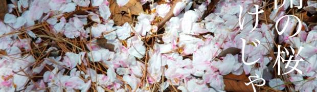 桜は散った後でも魅力的な件。